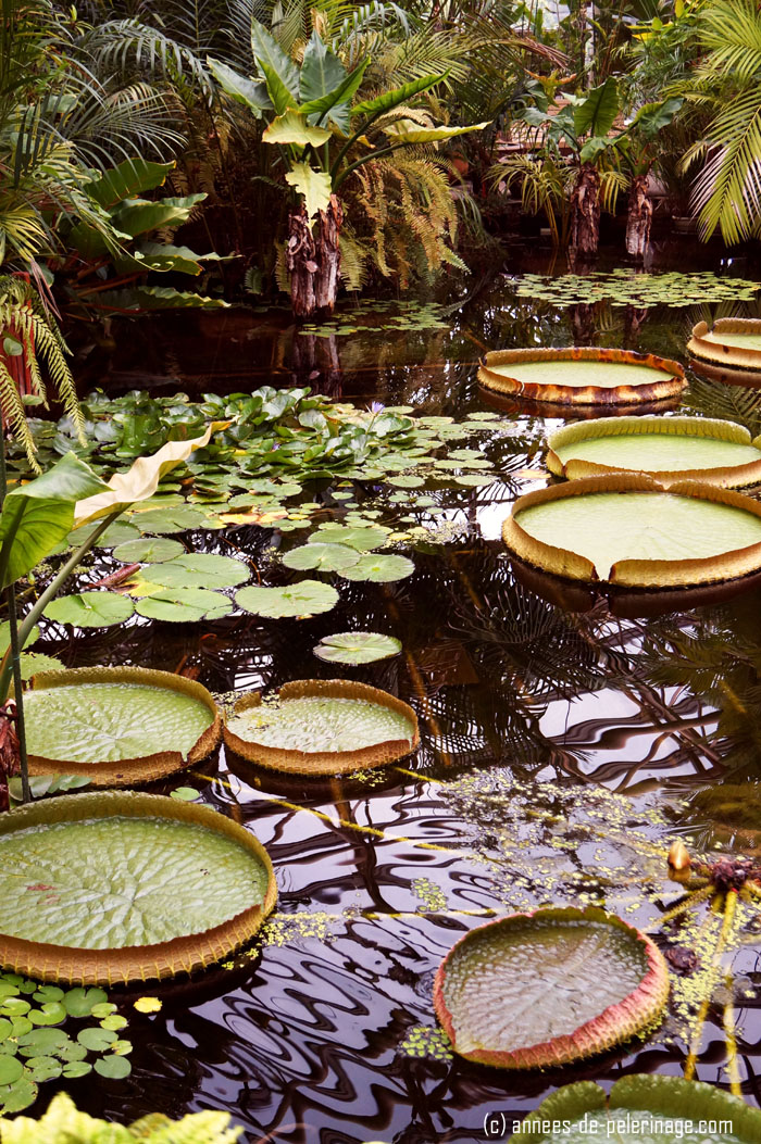 The botanical garden and its huge water lily ponds is one of the many points of interest in Okinawa