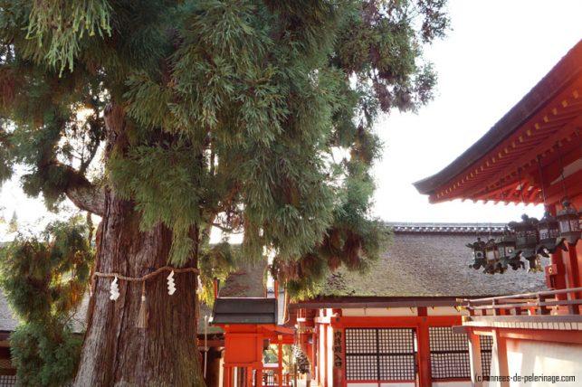 The main complex of Kasuga-Taisha in Nara and a holy shinto tree
