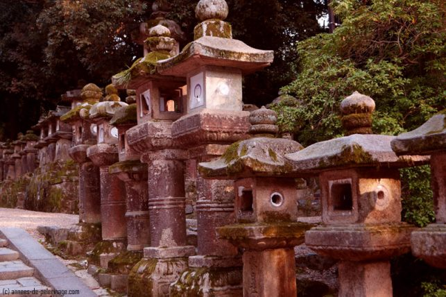 Moss covered stone lanterns on the path to kasgua-taisha in Nara
