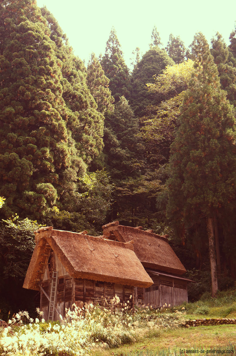 Two small barns nestled along the forest edge of Shirakwa-go in Japan