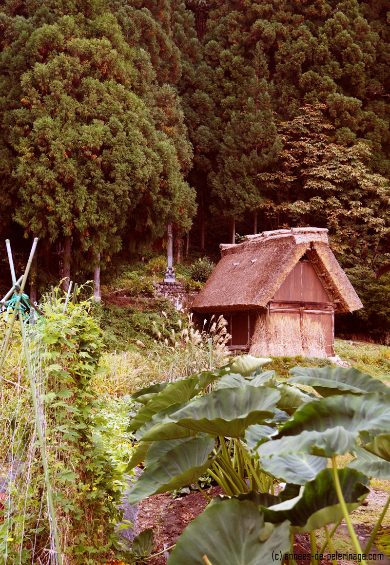A hidden vegetable garden in Shirakawa-go, Japan
