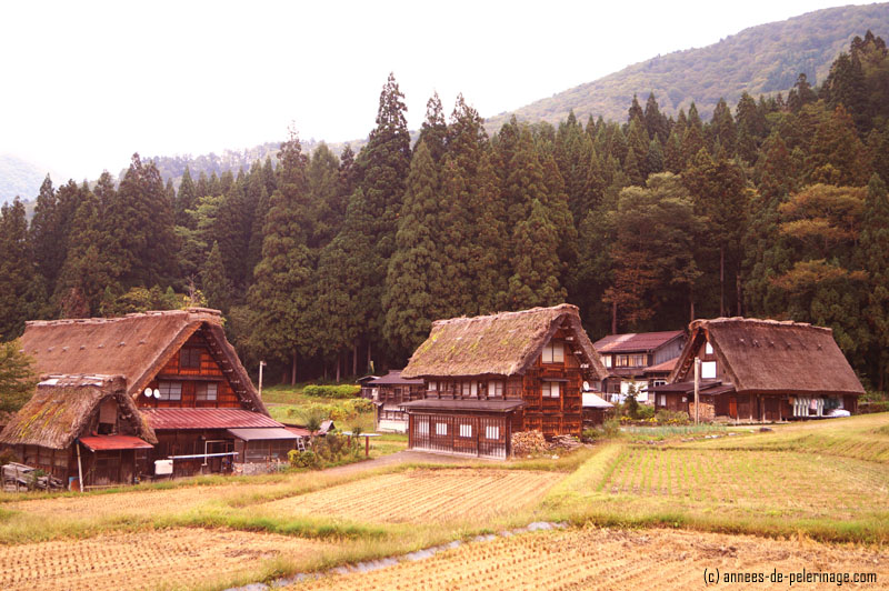 Gasshō-zukuri farmhouses in the village of shirakawa-go in japan