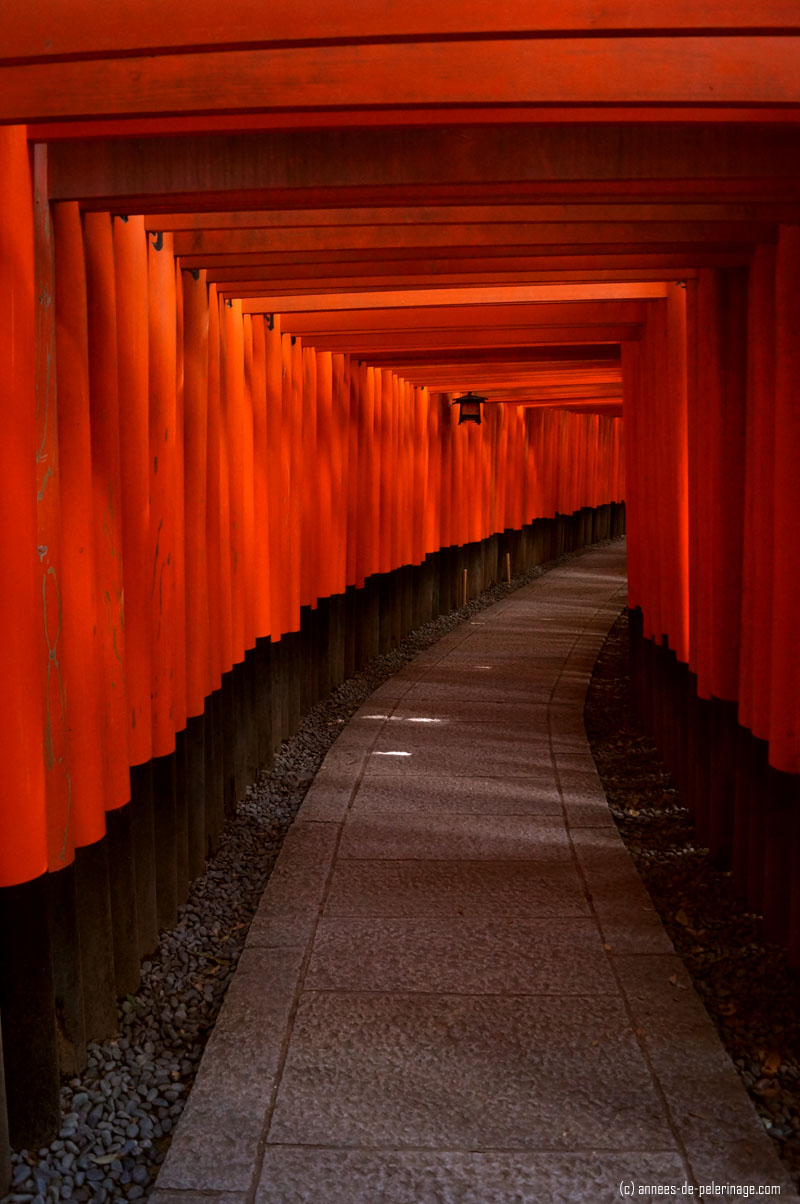 the red torii gates of fushimi inari-shrine in kyoto, japan