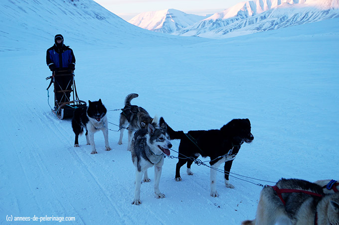 Dog sledding - me stopping along the scenic valley track