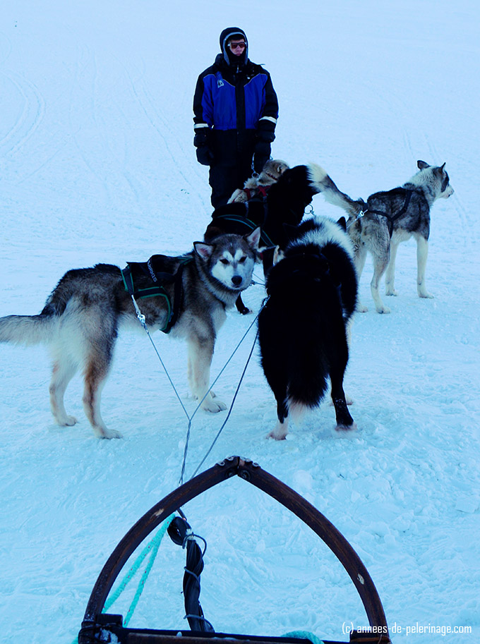 Before we set out to my first dog sledding experience in spitsbergen