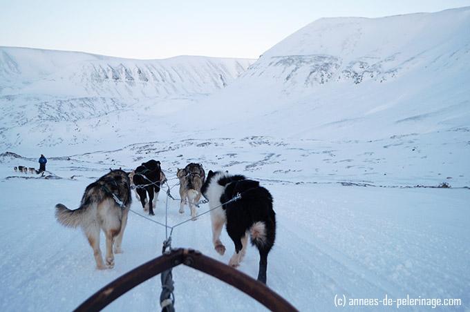 Dog sledding in Spitsbergen - enjoying the artic waste