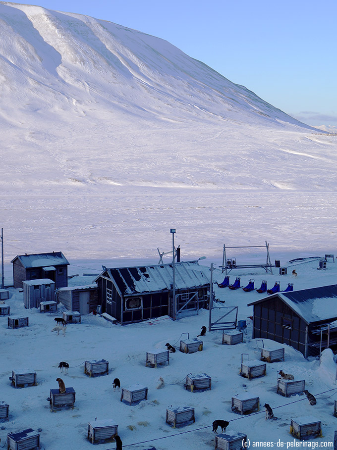 An overview over the husky pens of the sled dogs in Spitsbergen, Svalbard
