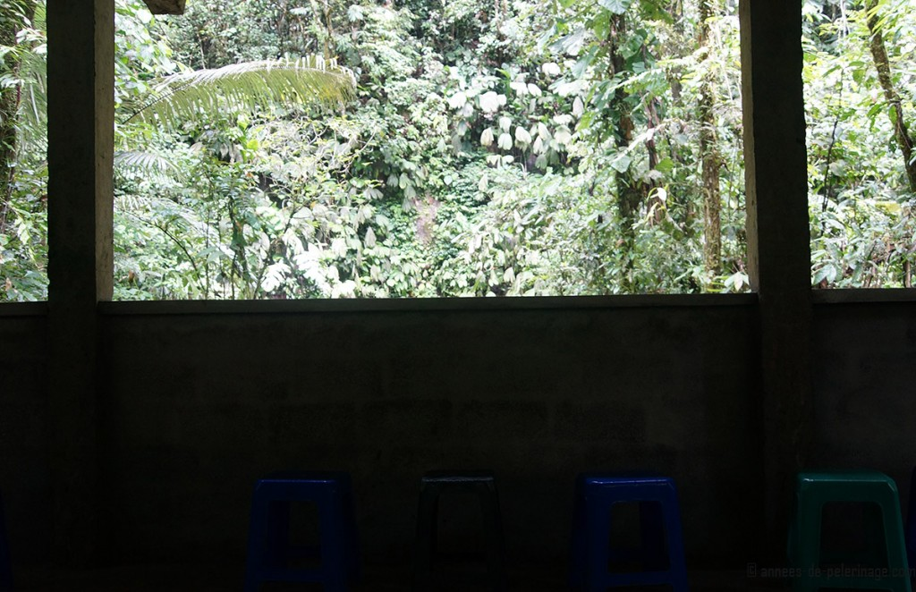 The view from inside the clay lick observatory at napo wildlife center in ecuador