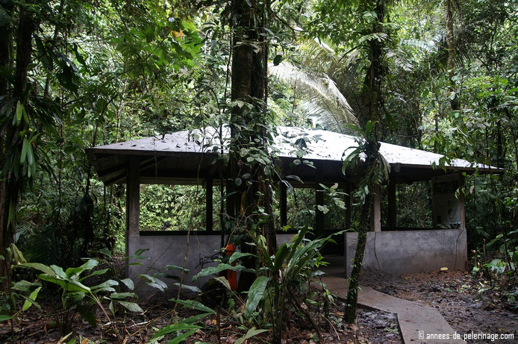 The bild observatory napo wildlife center clay lick in yasuni national park ecuador