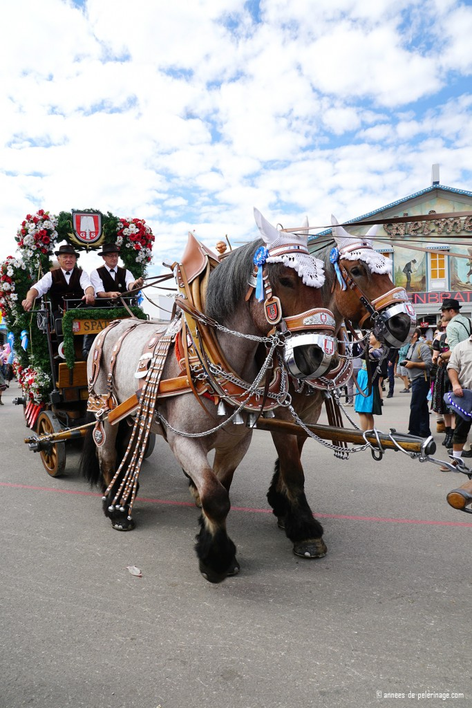 A horse carriage of spatenbräu entering the oktoberfest on the opening saturday parade