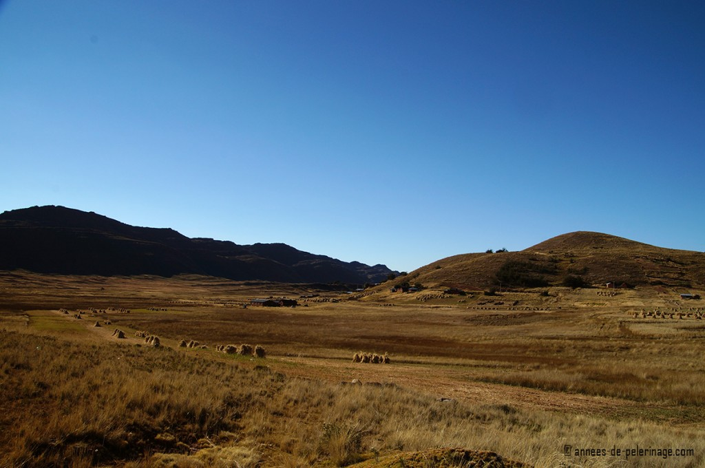 The sweeping hills of the landscape around puno peru, with many rows of drying barley