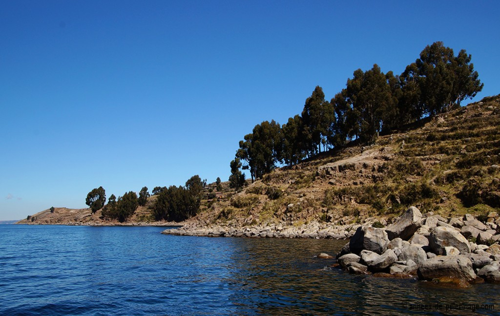 The scenic coast of Taquile islands lake titicaca peru with high cedar like trees reaching for the sky