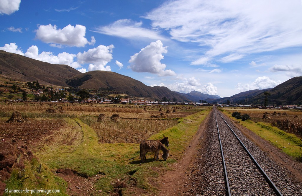 The beautiful landscape seen behind the Andean Explorer luxury train