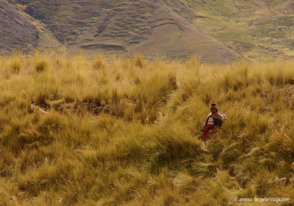 An inca woman sitting in the fields watching the Andean Explorer pass by