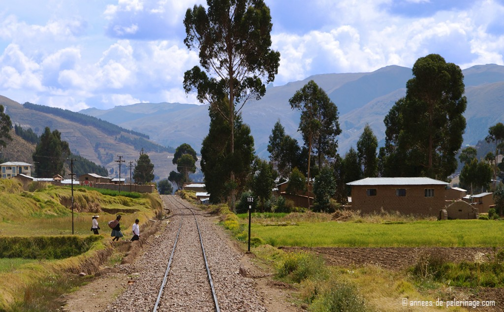 The landscape of the altiplano with tall trees and people crossing the tracks behind the Andean Explorer