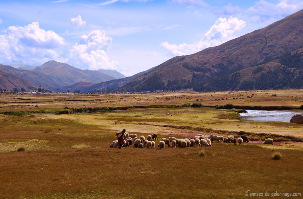 The landscape of the altiplano with a female shepherd and a little herd