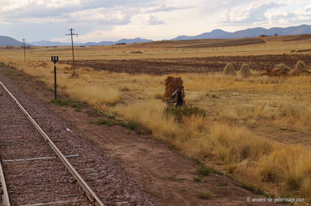 The train ride with the Peru Rail luxury train, farmers carrying hay on the sides