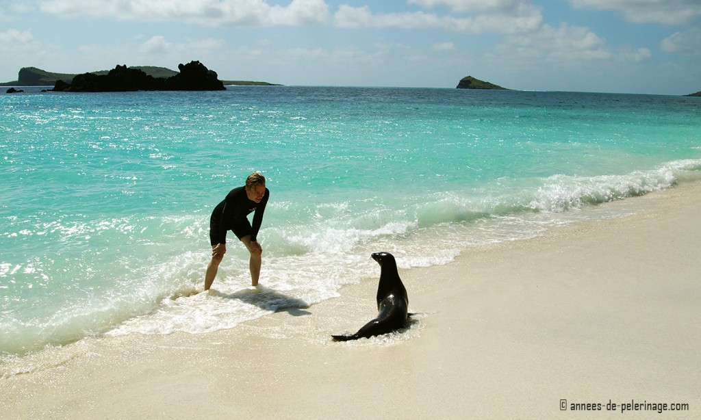 Me and a baby seal playing on the beach at the galapagos islands