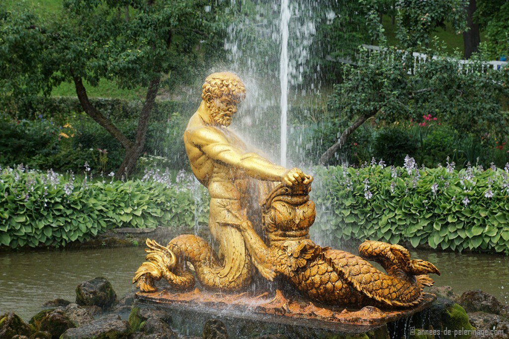 A little golden water fountain sitting in a pond inside Peterhof, St. Petersburg, Russia