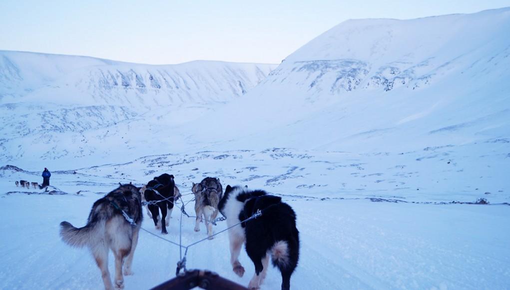 Dog sledding in Spitsbergen