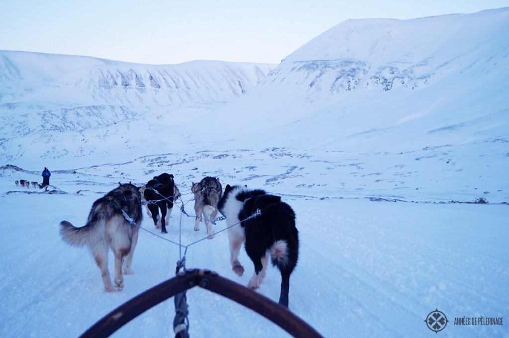 Dog sledding in Spitsbergen - if you are looking for things to do in Svalbard, then you should definitely miss this fun activity