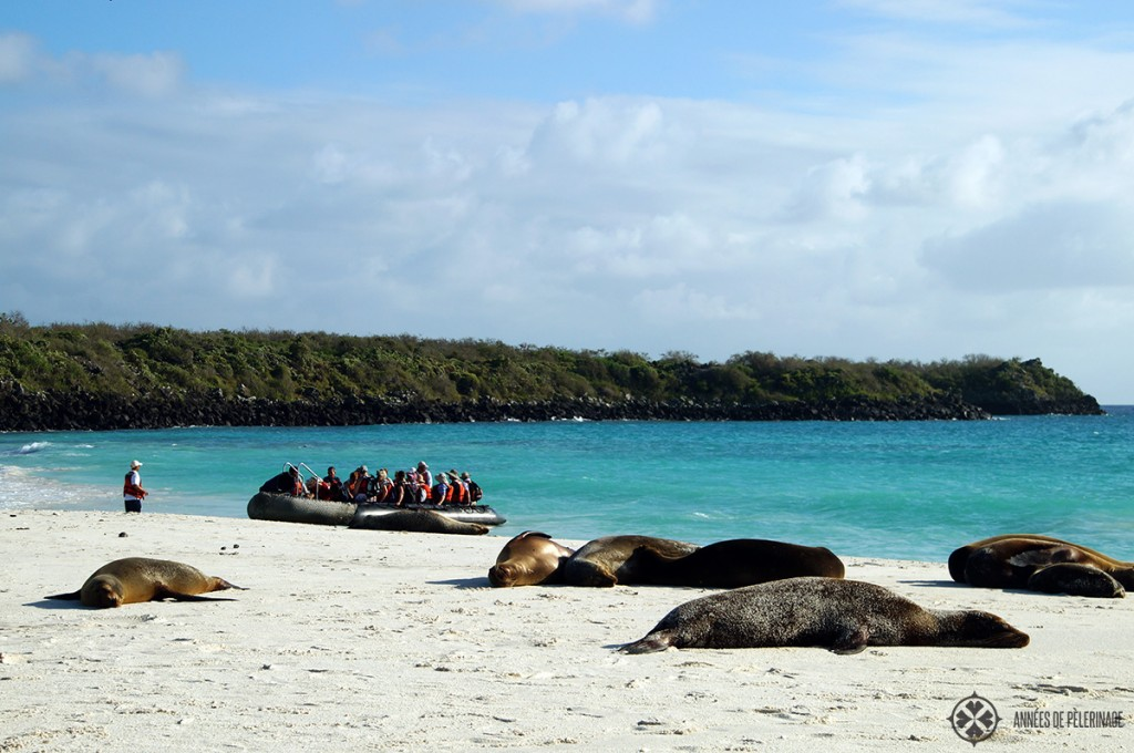 A wet landing on a pristine beach in galapagos forces you to pack water shoes