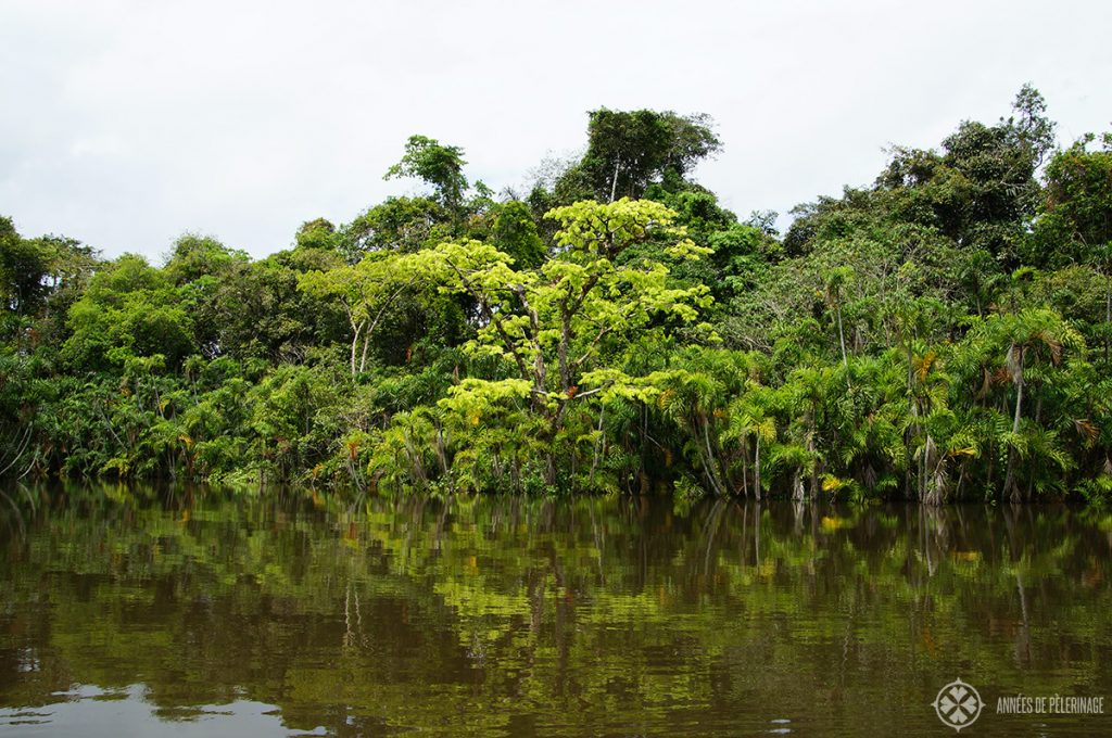 The Pañacocha Lagoon near the Yasuni National Park in Ecuador
