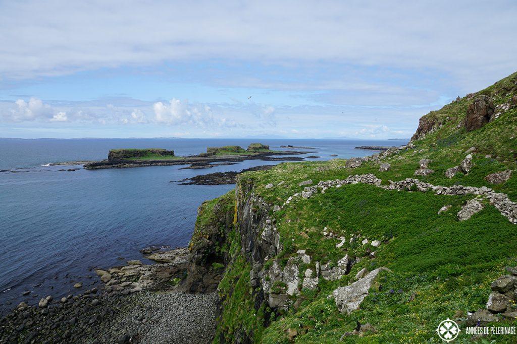 Lunga island puffin colony scotland