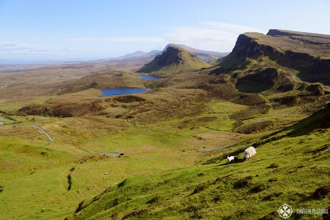 Sheep grazing along the Quiraing mountains on the Isle of Skye in Scotland