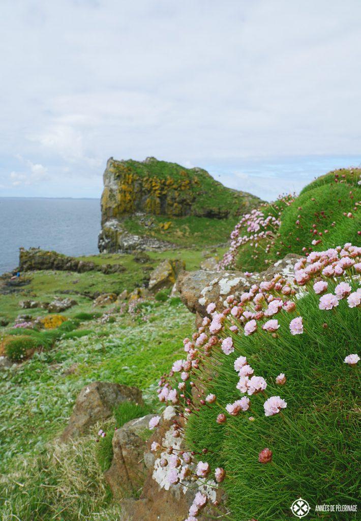 flowers and plants lunga island scotland