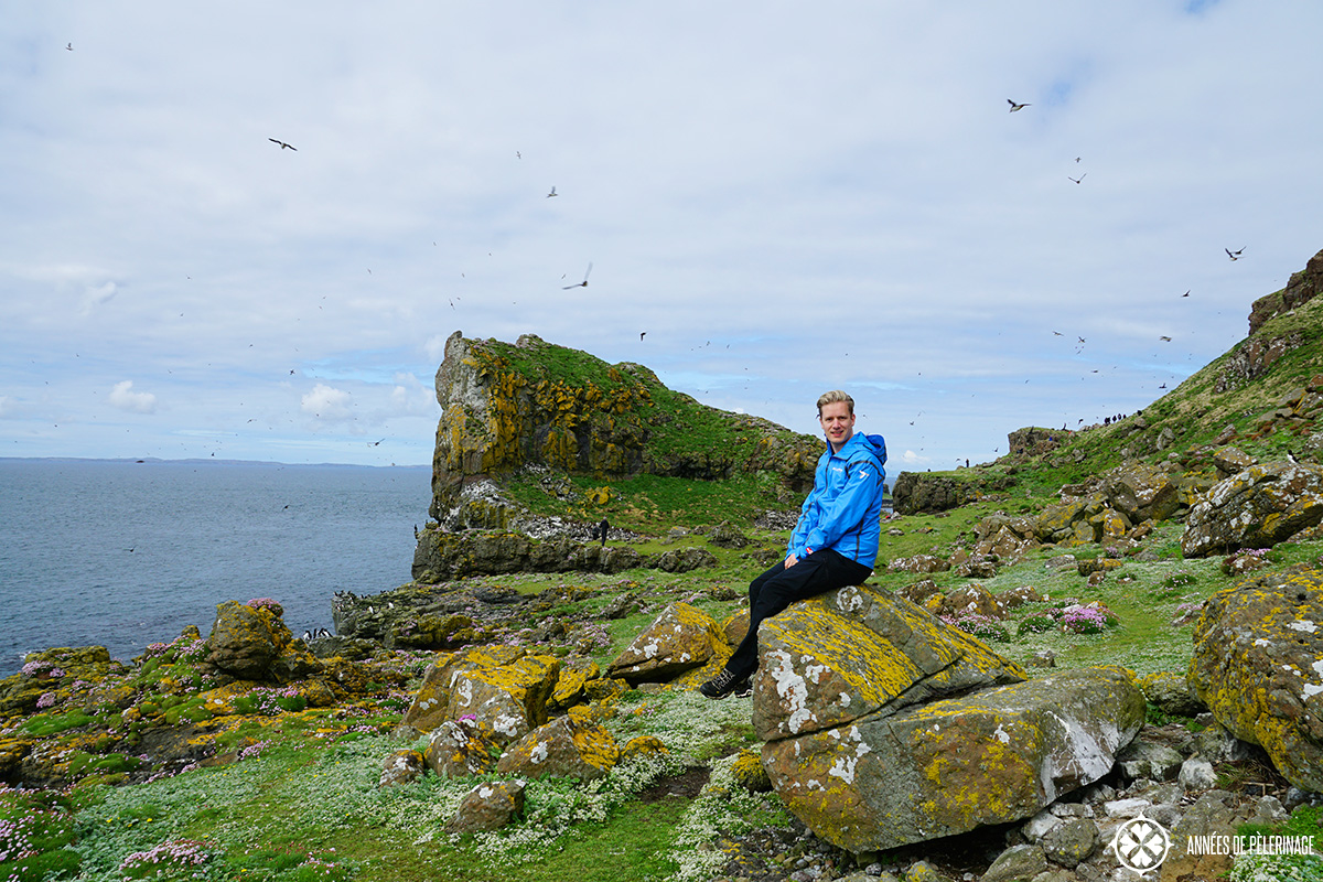 me puffin colony lunga island scotland