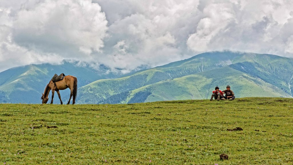 horses grazing on a meadow in Kyrgyzstan
