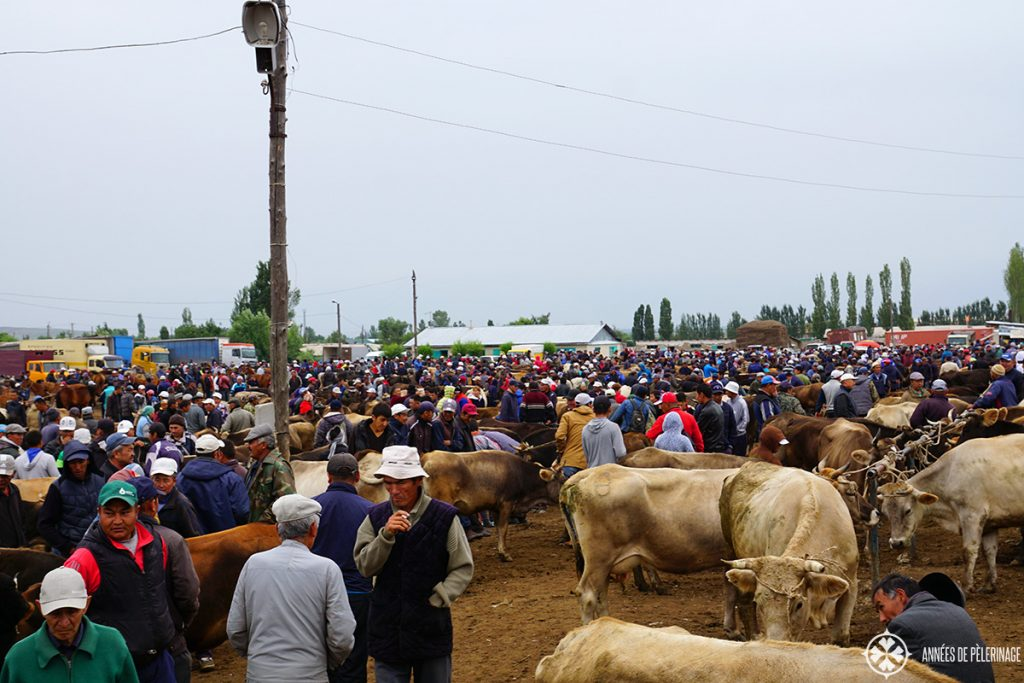 The horse and animal market in karakol is a wonderful thing to see in Kyrgyzstan. Only held on Sundays
