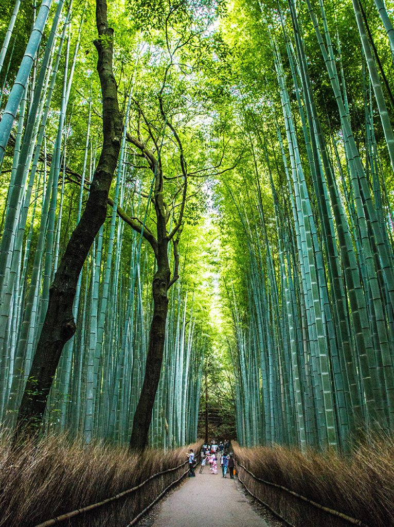The amazing Arashyama Bamboo forest Kyoto