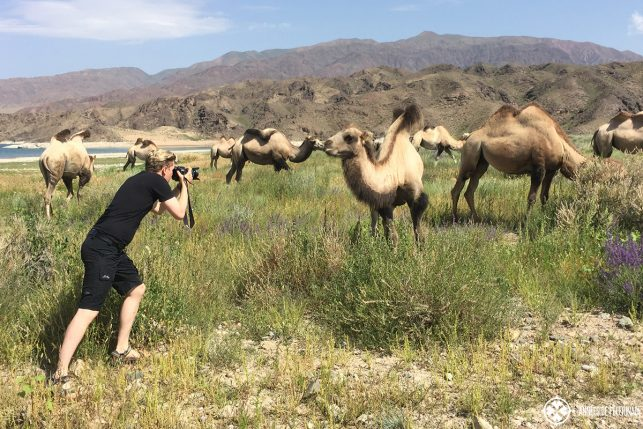 Me taking pictures of wild camels in Kyrgyzstan - put photo gear on your packing list!