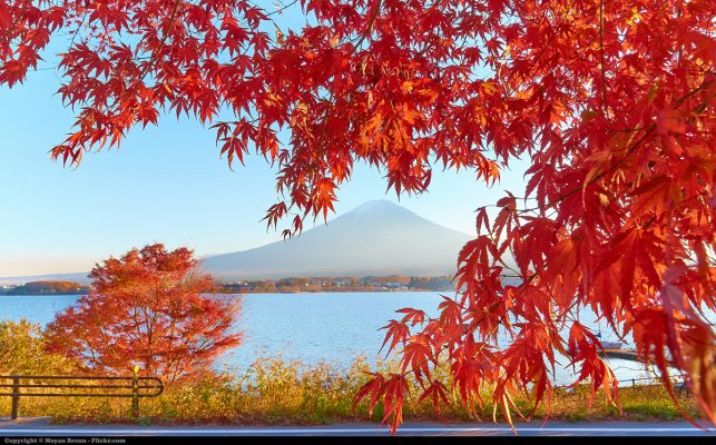 The Fujiyama mountain in Japan in Autumn