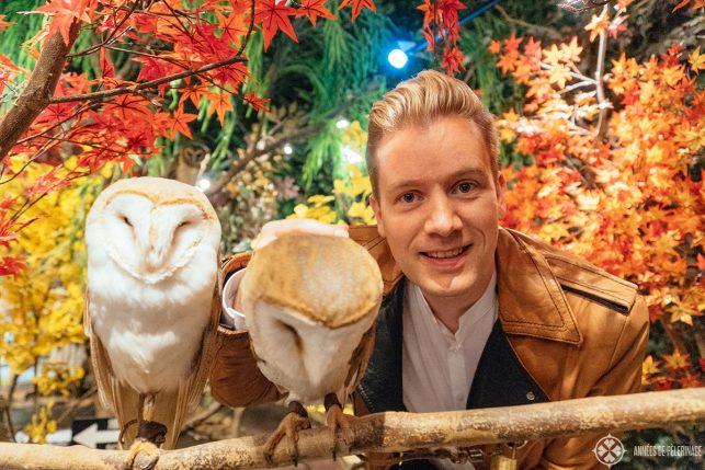 Me at an owl café in Harajuku, Tokyo
