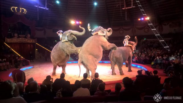 Elephants performing in the Circus Krone in Munich