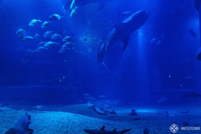 "the big tank inside the Osaka Aquarium ""Kaiyukan"" - one of the biggest aquariums in the world"