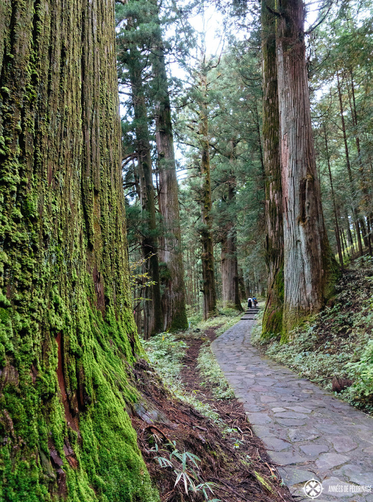 The cedar lined path leading through Nikko National Park (Takino'o path)