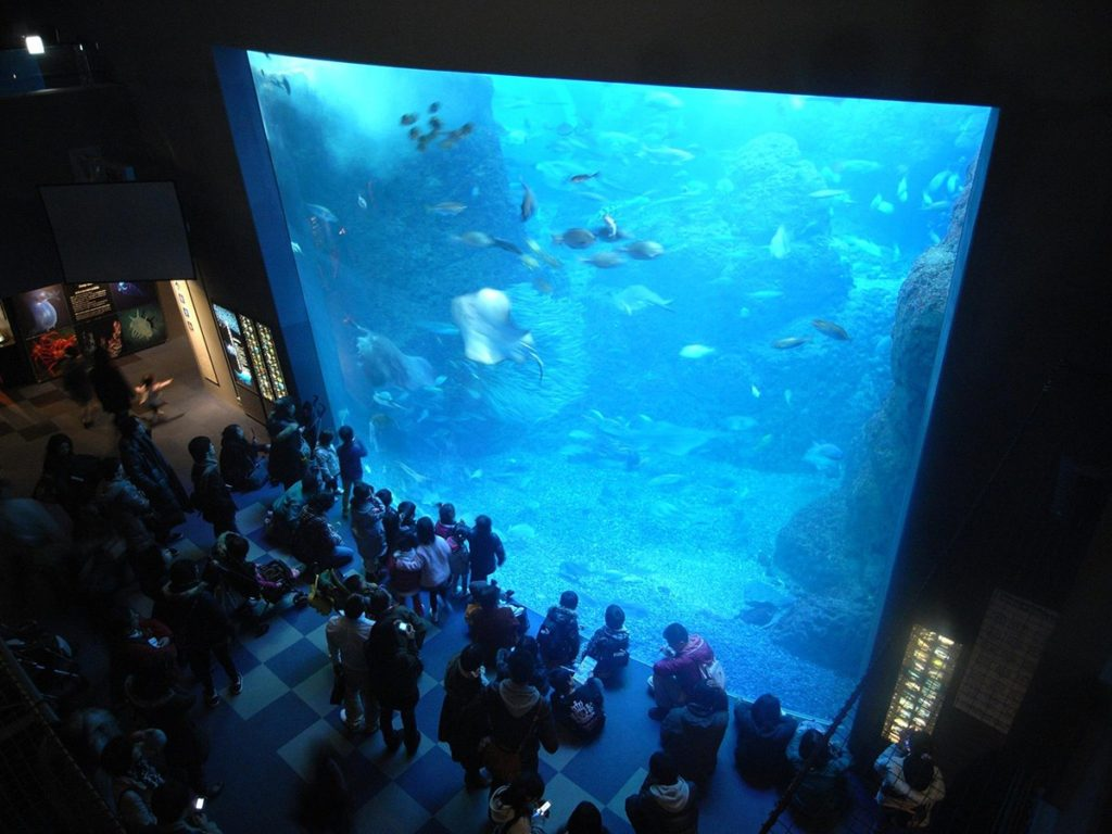 A big tank inside the Enoshima Aquarium