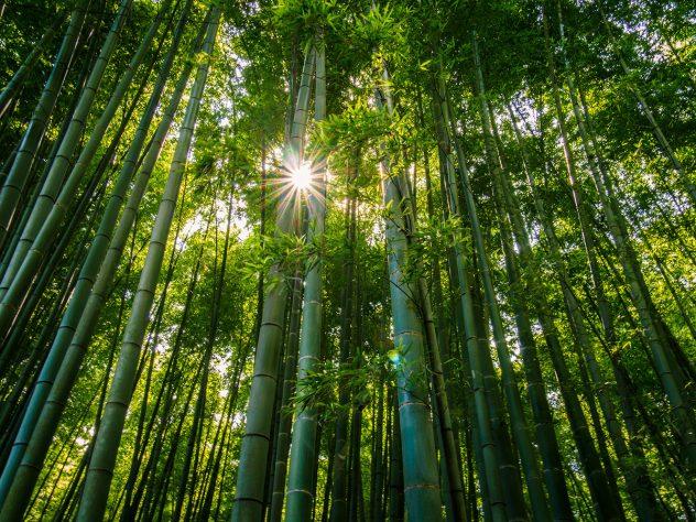 Kamakura Bamboo forest Hokokuji