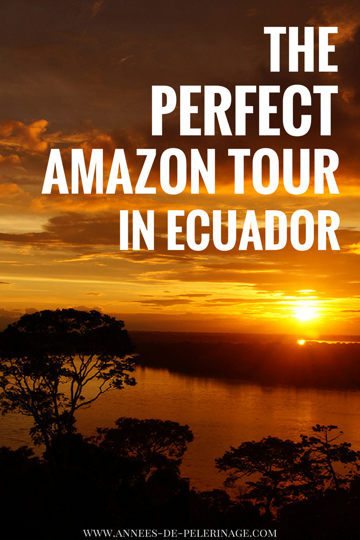 The perfect Amazon tour from Quito in Ecuador. How to choose your tour through the Amazon rainforest and get the most bang for your buck. Cruise or lodge? Where to see the most animals and which national park is the best in Ecuador. Click for more #wildlife #ecuador #travel #amazon