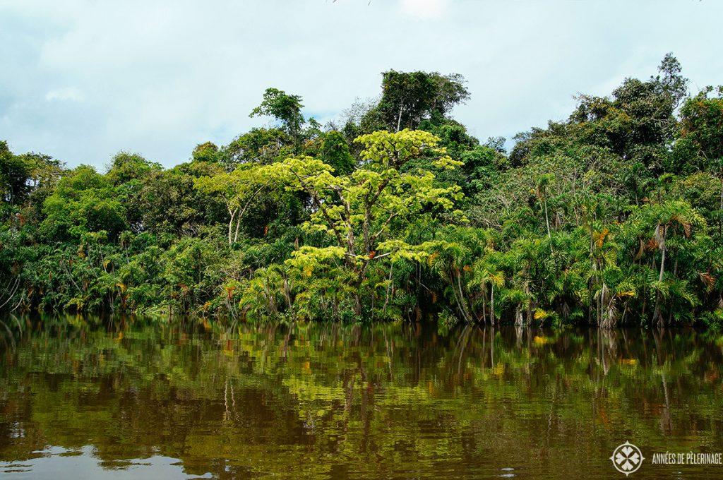 A amazon tour to the Pannacocha lagoon in Eucador