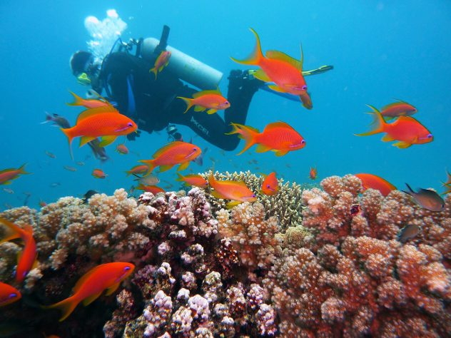 A scuba diver in the red sea of Egypt