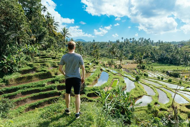 Excursion to the rice fields near Tengana in East bali as part of the Amankila luxury hotel