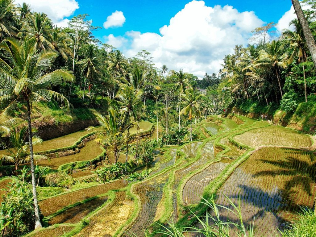 View along the famous the rice terraces of Tabana, close to Ubud, Bali
