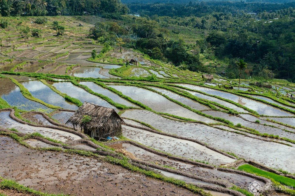 The rice terraces of tenganag in Bali, Indonesia