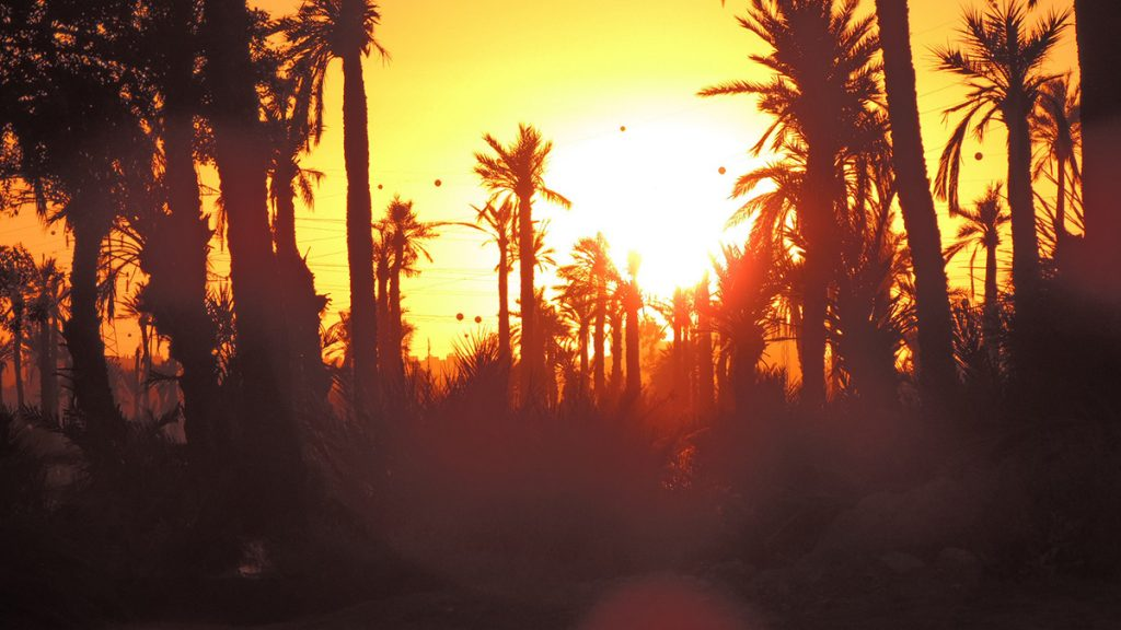 Sunset over the Palmeraie in Marrakesh, Morocco
