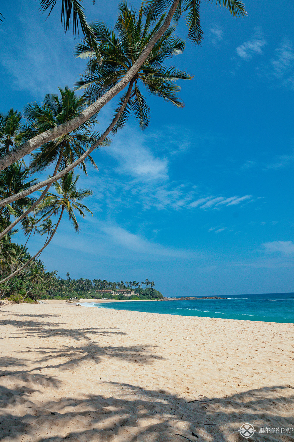 The coconut grove at Amanwella - the best beach resort in Sri lanka, i guess